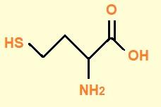 homocisteina vitamina B12