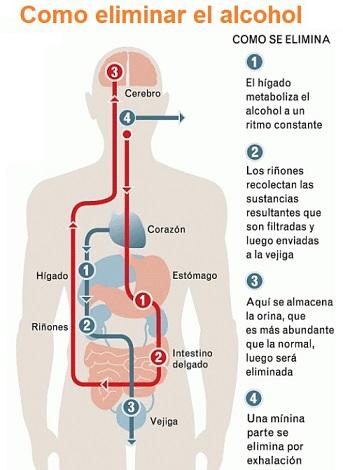 Eliminar el alcohol del cuerpo
