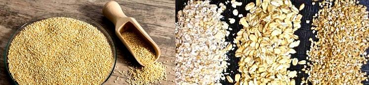 Origen vegetal de la vitamina B12